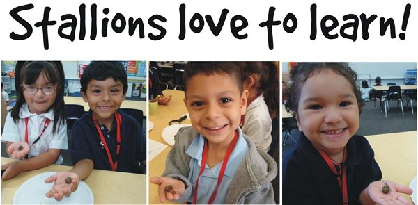 Stallions Love to learn!  3 separate pictures of 4 students holding a snail and smiling