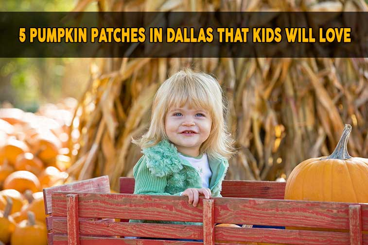 girl at pumpkin patch riding a red wagon
